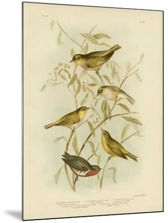 Grey-Backed Zosterops, 1891-Gracius Broinowski-Mounted Giclee Print