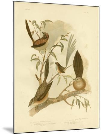 Striated Wren, 1891-Gracius Broinowski-Mounted Giclee Print