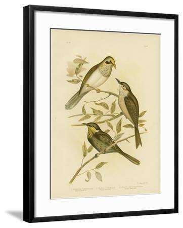 Yellow-Throated Miner, 1891-Gracius Broinowski-Framed Giclee Print