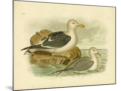 Pacific Gull, 1891-Gracius Broinowski-Mounted Giclee Print