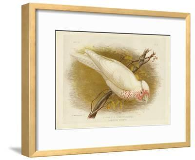 Long-Billed Cockatoo, 1891-Gracius Broinowski-Framed Giclee Print