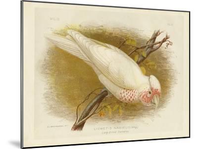 Long-Billed Cockatoo, 1891-Gracius Broinowski-Mounted Giclee Print