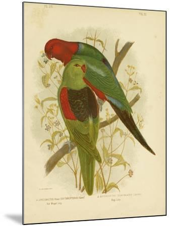 Red-Winged Lori or Red-Winged Parrot, 1891-Gracius Broinowski-Mounted Giclee Print