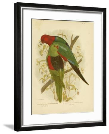 Red-Winged Lori or Red-Winged Parrot, 1891-Gracius Broinowski-Framed Giclee Print