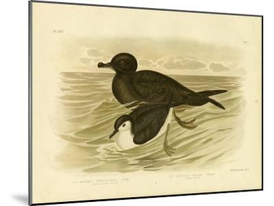 Short-Tailed Petrel, 1891-Gracius Broinowski-Mounted Giclee Print