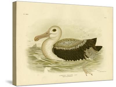 Silvery-Grey Petrel, 1891-Gracius Broinowski-Stretched Canvas Print
