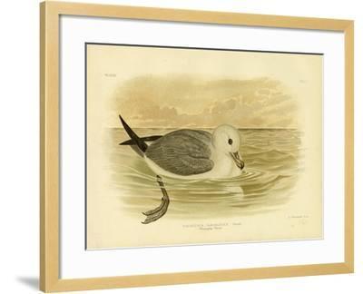 Silvery-Grey Petrel, 1891-Gracius Broinowski-Framed Giclee Print