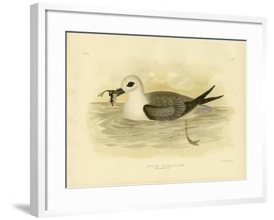 White-Headed Petrel, 1891-Gracius Broinowski-Framed Giclee Print