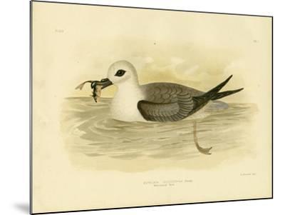 White-Headed Petrel, 1891-Gracius Broinowski-Mounted Giclee Print