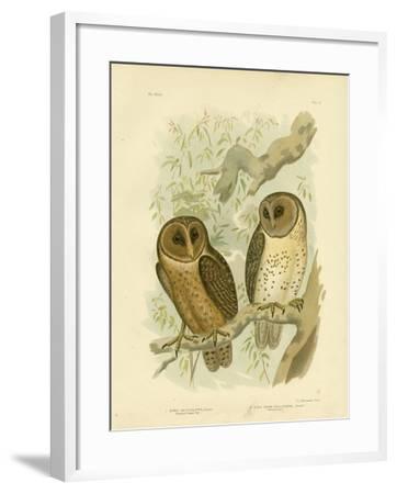 Chestnut-Faced Owl, 1891-Gracius Broinowski-Framed Giclee Print