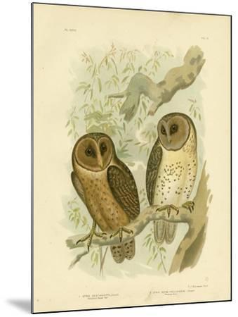 Chestnut-Faced Owl, 1891-Gracius Broinowski-Mounted Giclee Print