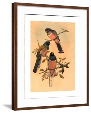 Trogan Variegatus, Probably 1836-1838- Gould & Hart-Framed Giclee Print