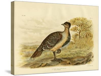 Native Pheasant or Malleefowl, 1891-Gracius Broinowski-Stretched Canvas Print