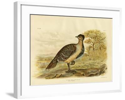Native Pheasant or Malleefowl, 1891-Gracius Broinowski-Framed Giclee Print