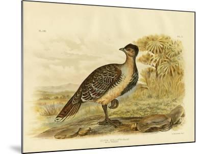Native Pheasant or Malleefowl, 1891-Gracius Broinowski-Mounted Giclee Print