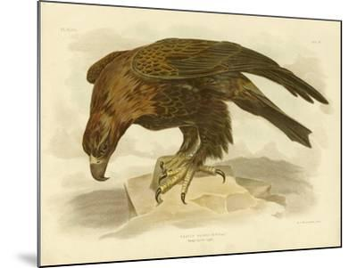 Wedge-Tailed Eagle, 1891-Gracius Broinowski-Mounted Giclee Print