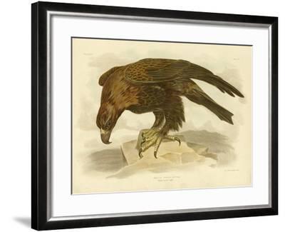 Wedge-Tailed Eagle, 1891-Gracius Broinowski-Framed Giclee Print