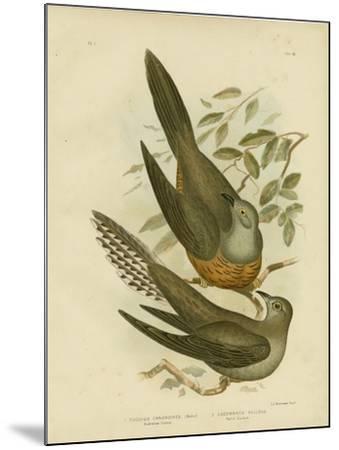 Australian Cuckoo, 1891-Gracius Broinowski-Mounted Giclee Print