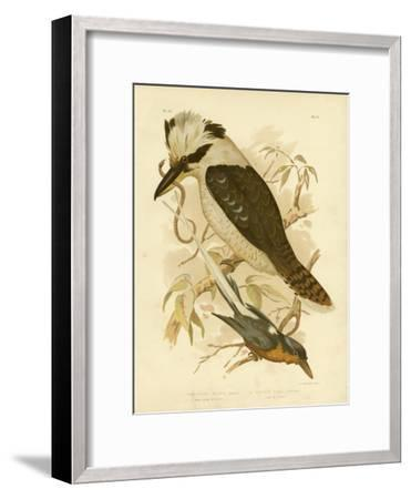 White-Tailed Kingfisher, 1891-Gracius Broinowski-Framed Giclee Print