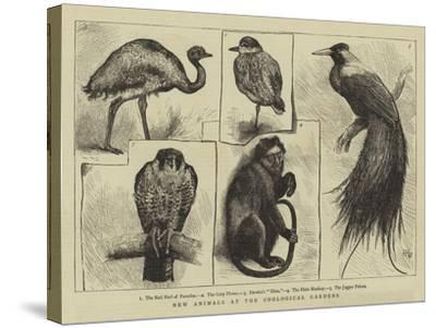 New Animals at Zoological Gardens-Harry Hamilton Johnston-Stretched Canvas Print