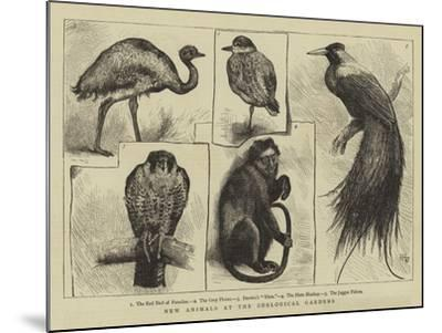 New Animals at Zoological Gardens-Harry Hamilton Johnston-Mounted Giclee Print