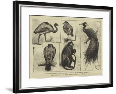 New Animals at Zoological Gardens-Harry Hamilton Johnston-Framed Giclee Print