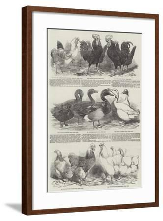 The Poultry Exhibition at Birmingham-Harrison William Weir-Framed Giclee Print