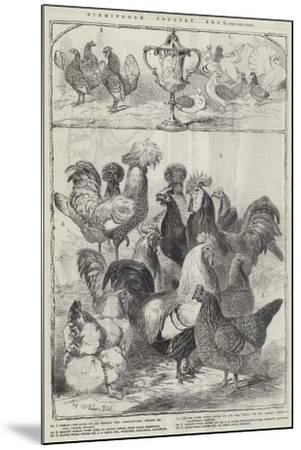Birmingham Poultry Show-Harrison William Weir-Mounted Giclee Print
