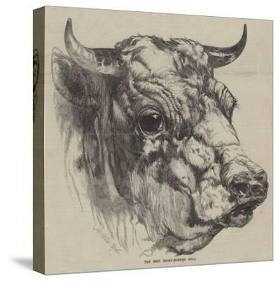 The Best Short-Horned Bull-Harrison William Weir-Stretched Canvas Print