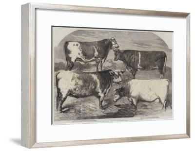 Prize Shorthorns at the Royal Agricultural Society's Show, Canterbury-Harrison William Weir-Framed Giclee Print