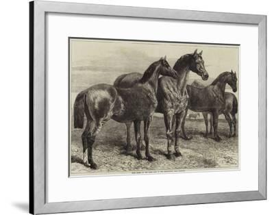 Prize Horses at the Horse Show in the Agricultural Hall, Islington-Harrison William Weir-Framed Giclee Print