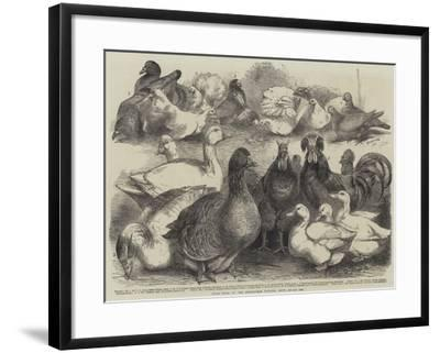 Prize Birds at the Birmingham Poultry Show-Harrison William Weir-Framed Giclee Print