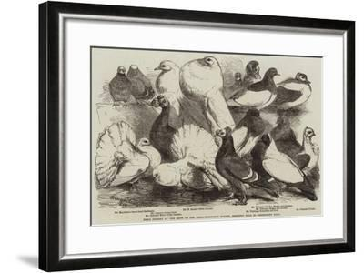 Prize Pigeons at the Show of the Philo-Peristeron Society, Recently Held in Freemasons' Hall-Harrison William Weir-Framed Giclee Print