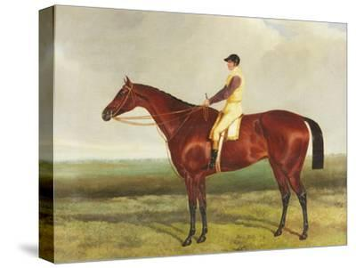 Bee's Wing', C.1840-45-Harry Hall-Stretched Canvas Print