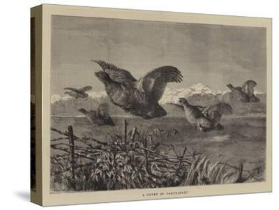 A Covey of Partridges-Harrison William Weir-Stretched Canvas Print