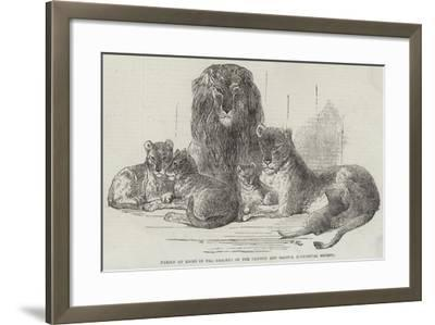 Family of Lions in the Gardens of the Clifton and Bristol Zoological Society-Harrison William Weir-Framed Giclee Print
