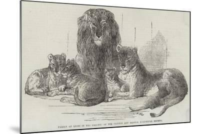 Family of Lions in the Gardens of the Clifton and Bristol Zoological Society-Harrison William Weir-Mounted Giclee Print
