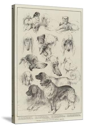 The Kennel Club Dog Show at the Royal Aquarium, Prize Dogs-Harrison William Weir-Stretched Canvas Print