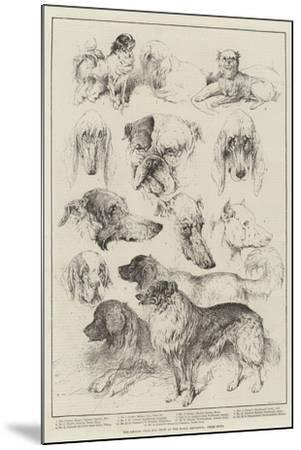 The Kennel Club Dog Show at the Royal Aquarium, Prize Dogs-Harrison William Weir-Mounted Giclee Print