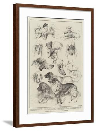 The Kennel Club Dog Show at the Royal Aquarium, Prize Dogs-Harrison William Weir-Framed Giclee Print