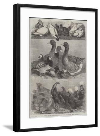 Prize Poultry and Pigeons at the Birmingham Exhibition-Harrison William Weir-Framed Giclee Print
