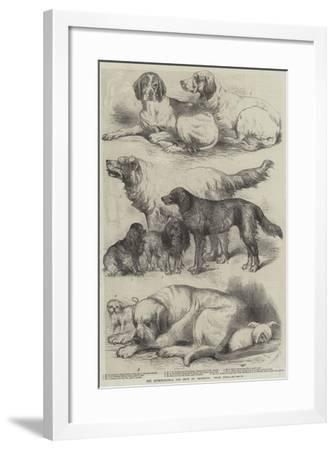 The International Dog Show at Islington, Prize Dogs-Harrison William Weir-Framed Giclee Print