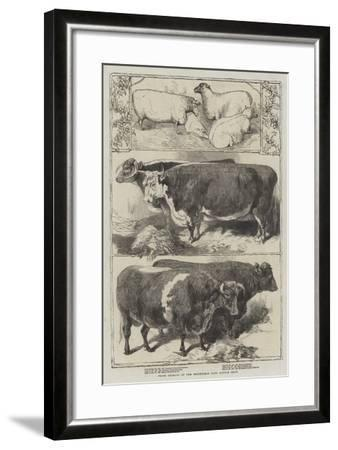 Prize Animals of the Smithfield Club Cattle Show-Harrison William Weir-Framed Giclee Print