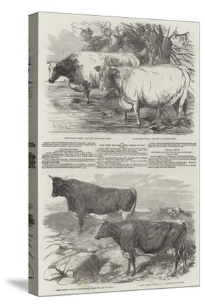 Exhibition of the Royal Agricultural Society of England-Harrison William Weir-Stretched Canvas Print