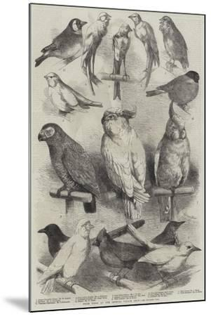Prize Birds at the Crystal Palace Show-Harrison William Weir-Mounted Giclee Print