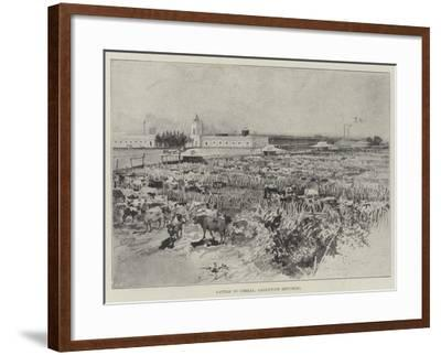 Cattle in Corral, Argentine Republic-Henry Charles Seppings Wright-Framed Giclee Print