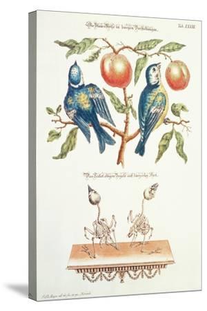 Blue Tits from Angenehmer Und Nutzlicher-J. D. Meyer-Stretched Canvas Print