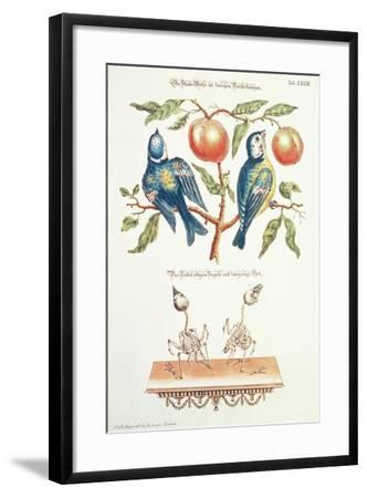 Blue Tits from Angenehmer Und Nutzlicher-J. D. Meyer-Framed Giclee Print