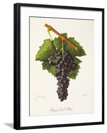Etraire Del'Adui Grape-J. Troncy-Framed Giclee Print
