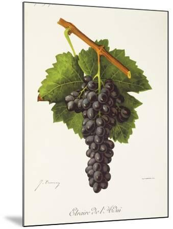 Etraire Del'Adui Grape-J. Troncy-Mounted Giclee Print